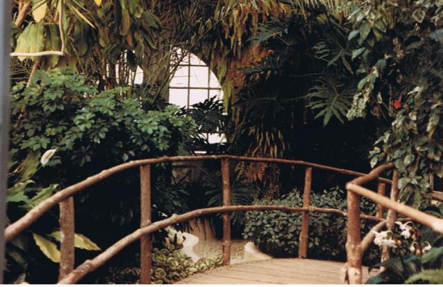 Biltmore greenhouse 001